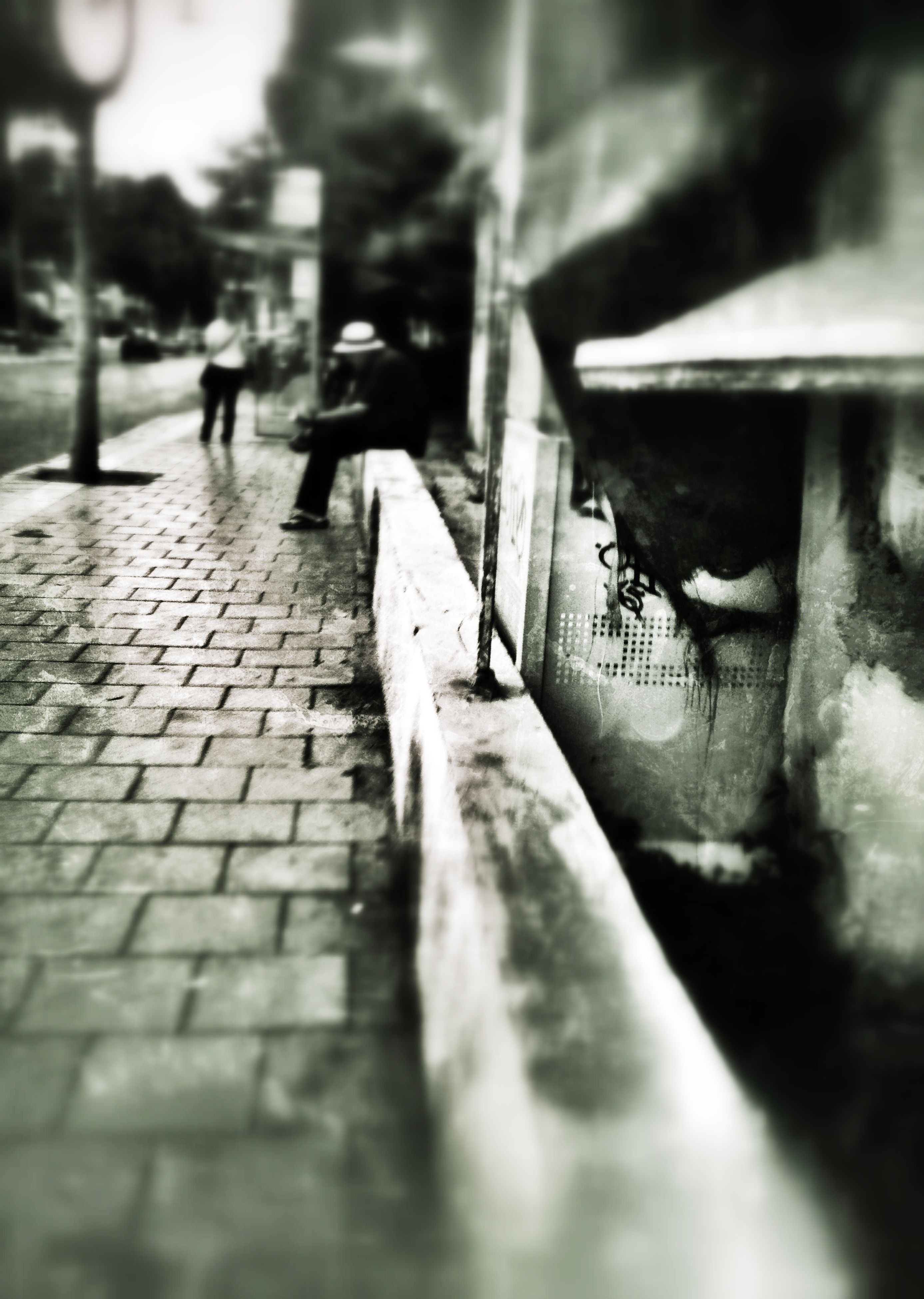 animal themes, one animal, bird, selective focus, street, wildlife, walking, animals in the wild, cobblestone, surface level, focus on foreground, outdoors, footpath, full length, day, pigeon, sunlight, sidewalk, pavement, wood - material