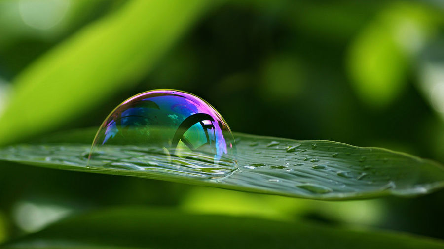 Playing with bubbles Taking Photos Hello World Relaxing Enjoying Life Nature On The Door Step Life Is Beautiful Naturelovers Photography Nature_collection Soap Bubble