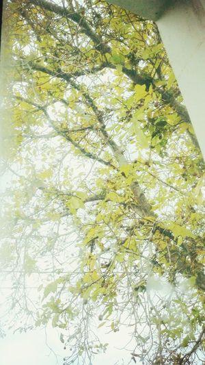 Осень. 2015. Красота и мудрость природы. First Eyeem Photo Ольга Иванченко