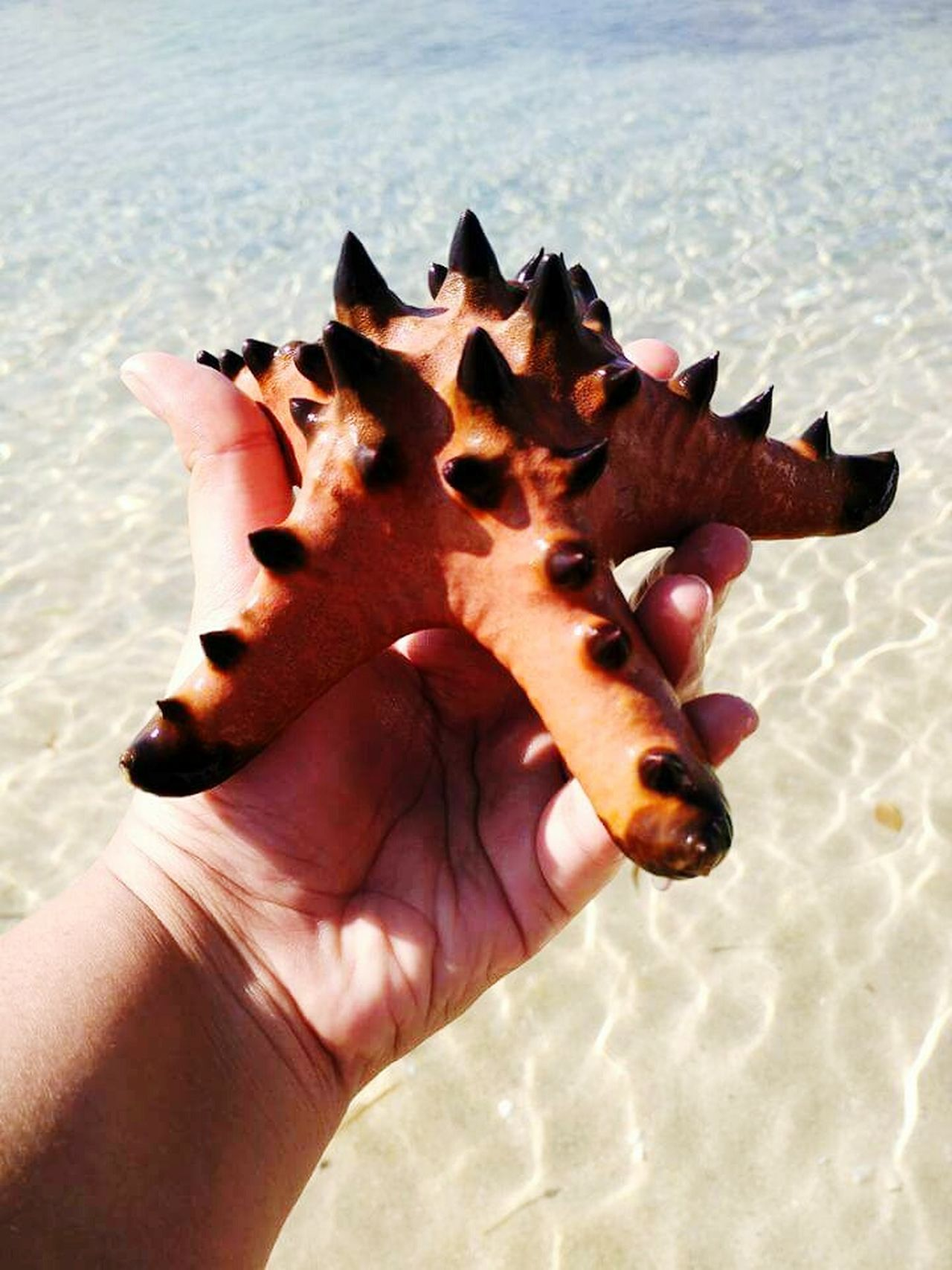 Patrick the StarFish! Human Hand Starfish At Beach Starfish  Ocean❤