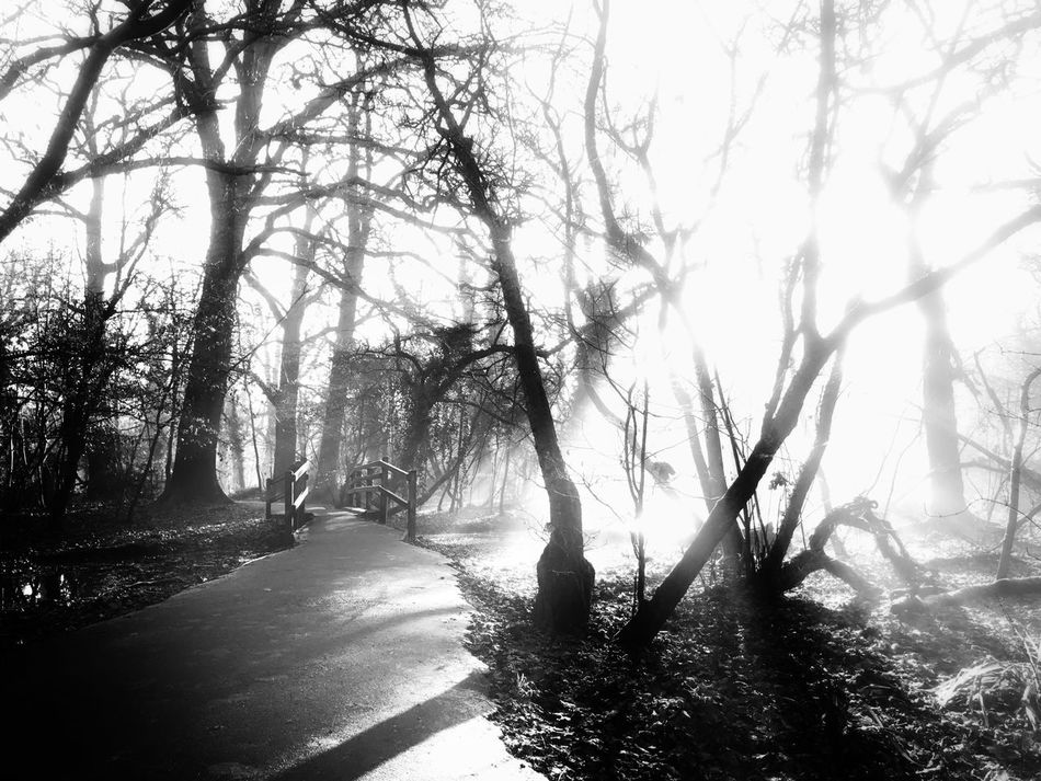 Cassiobury Park Watford Tranquil Scene Blackandwhite Black & White Blackandwhite Photography Black And White Photography Foggy Light And Shadow
