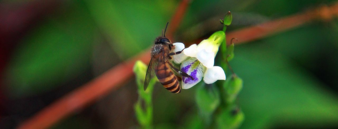 Panoramic View Of Bee Perching On White Flower