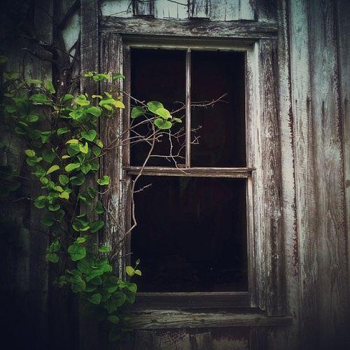 Window to my soul... Natures Diversities Atmospheric Hauntingly Beautiful EyeEm_abandonment Window_filth Windows Creepywindowsunday Rurex Window View
