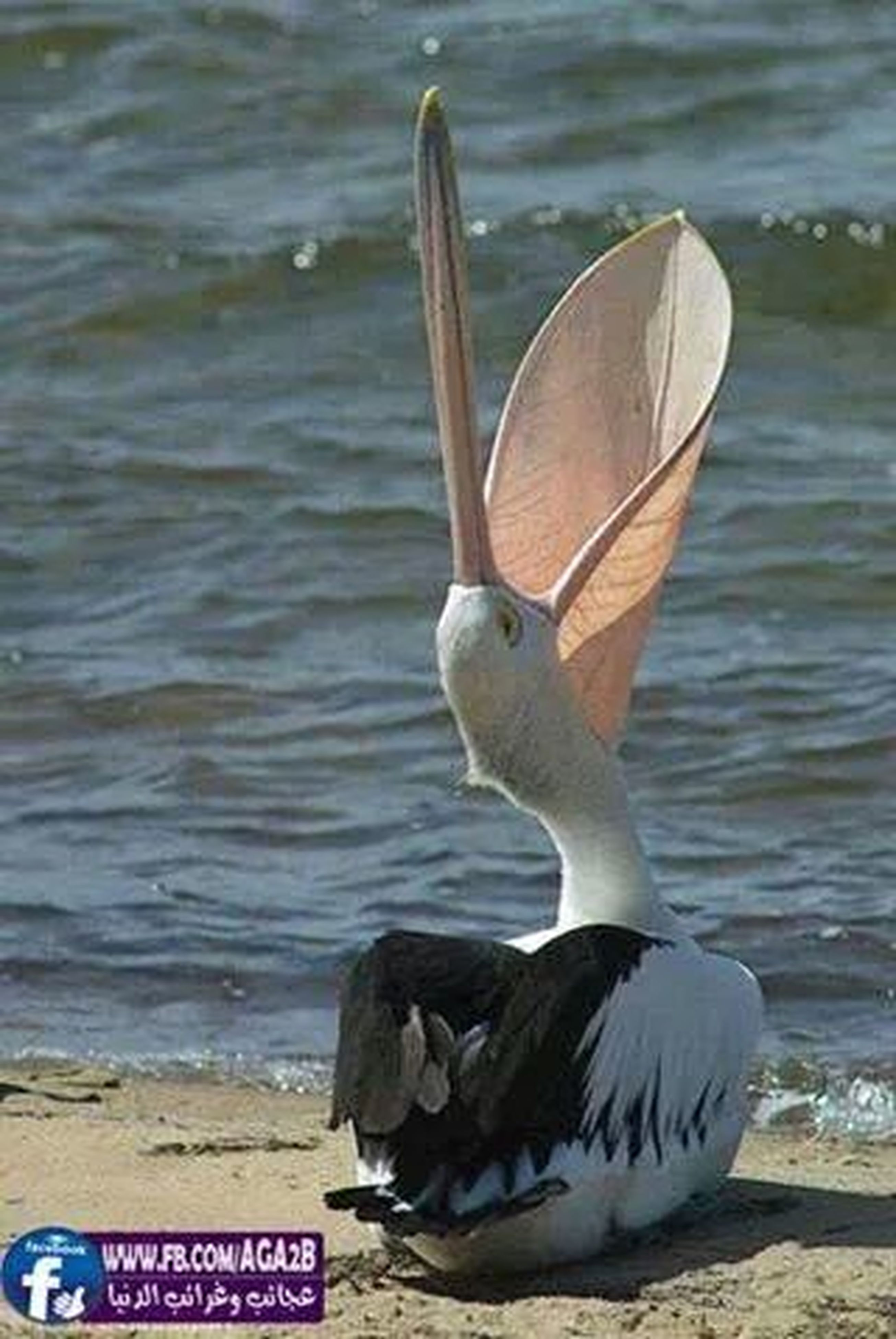 bird, animal themes, animals in the wild, water, wildlife, seagull, one animal, focus on foreground, sea, pelican, perching, beak, nature, close-up, day, outdoors, side view, no people, text, sea bird