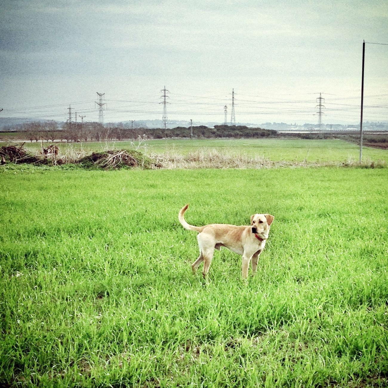 My Dog Morning Trip Enjoying Life