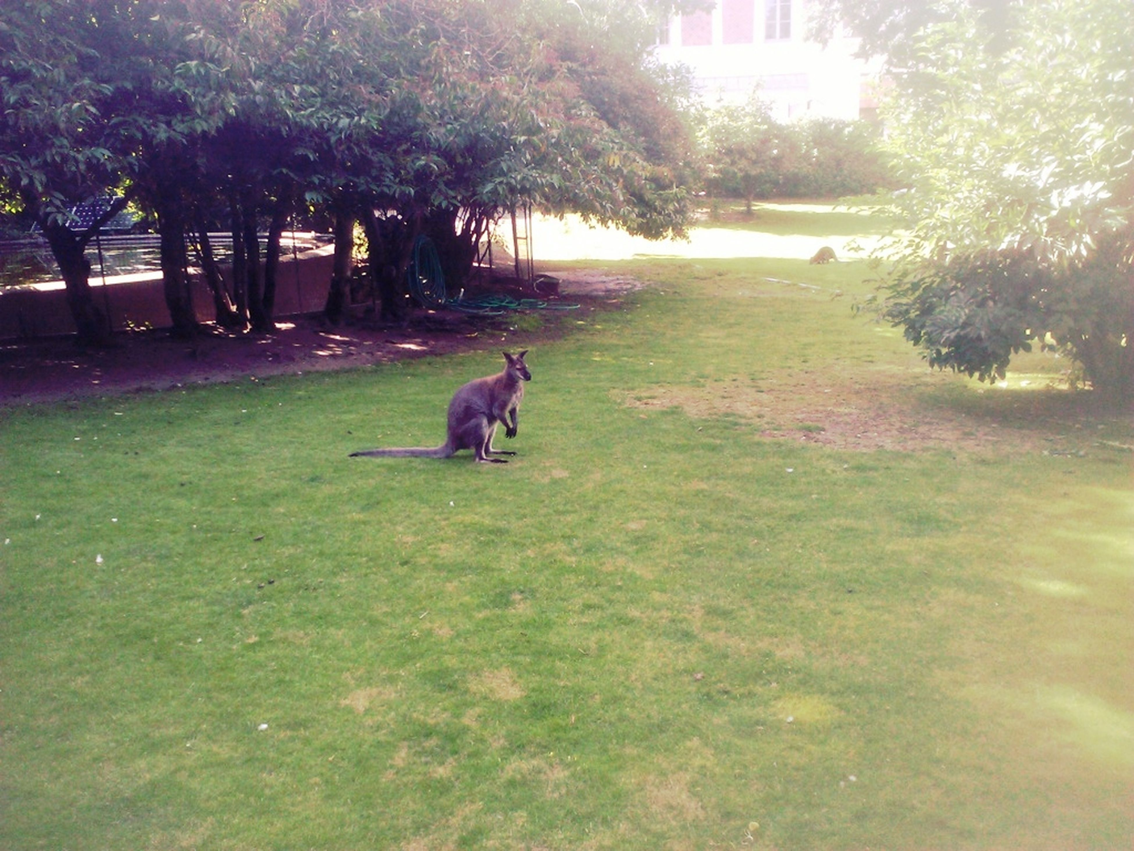 tree, grass, animal themes, domestic animals, pets, one animal, dog, mammal, park - man made space, field, sunlight, grassy, nature, growth, tranquility, sitting, relaxation, green color, day, lawn