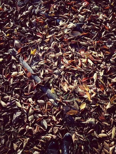 Autumn :P Autumn Korea Leaves