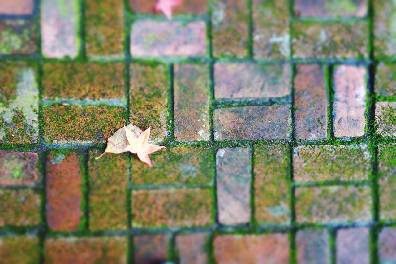 No People Day Outdoors Multi Colored Nature Close-up Brick Floor Leaf 🍂 November California Moss-covered Brickporn Autumn Colors Blurry On Purpose