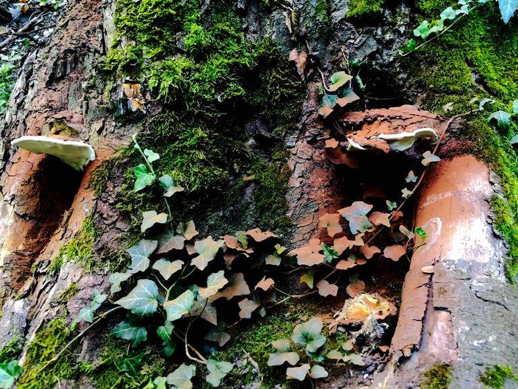 Creeper Plant Tree Trunk Outdoors Mushroom Looks Like... Cocoa Powder Leaf Growing Green Color Damaged Fragility