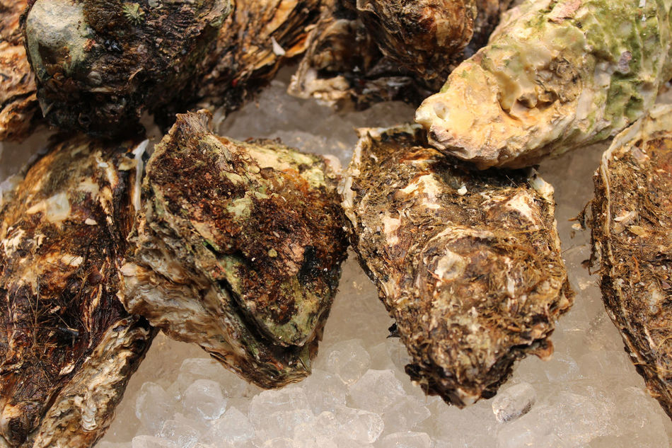 Oysters on sale in the Kuromon Ichiba Market, Osaka, Japan Close-up Day Food Kuromon Ichiba Market No People Outdoors Oysters Ready-to-eat Seafood Shells