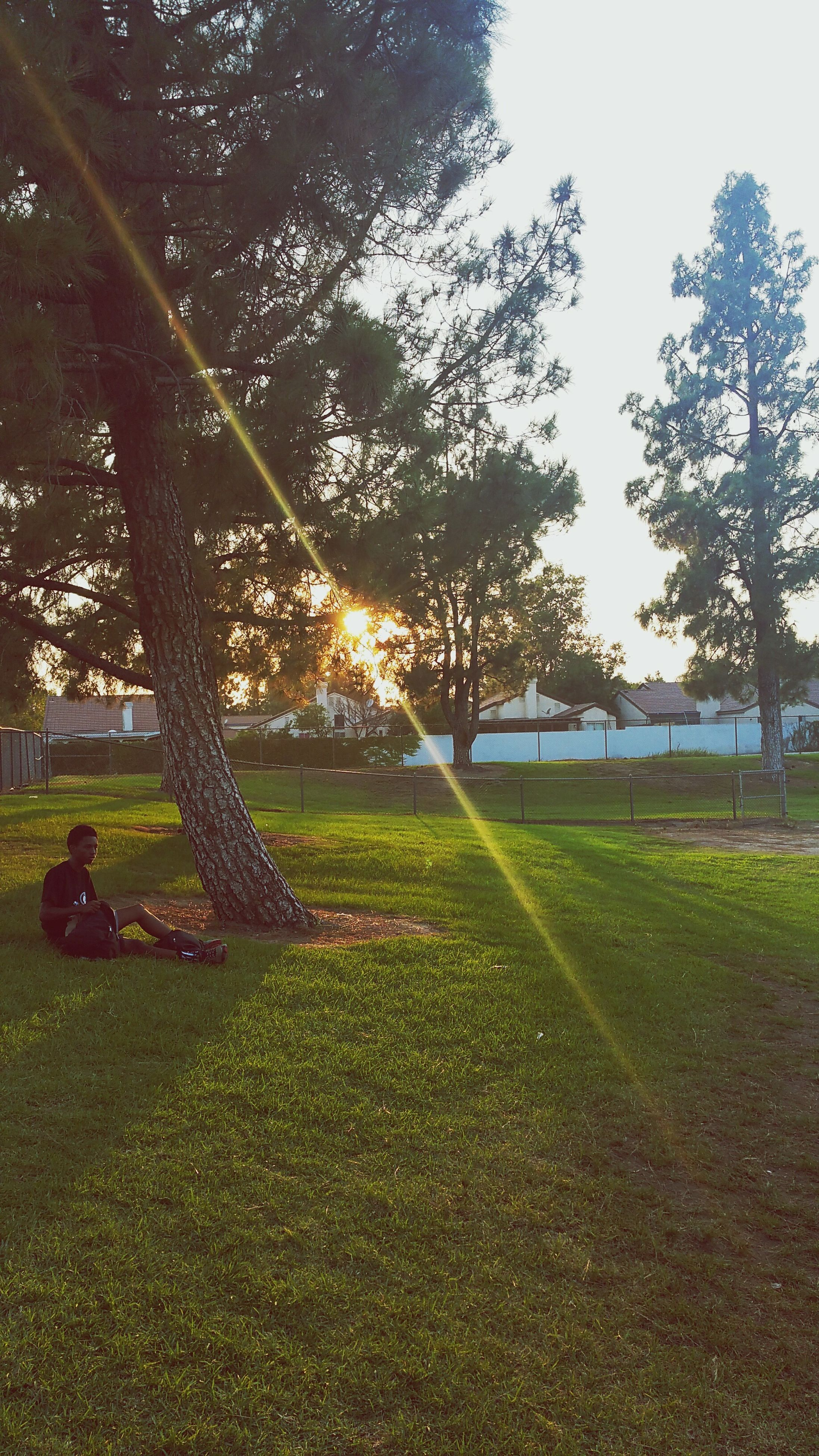 grass, tree, sunlight, field, sun, tranquility, sunbeam, green color, grassy, tranquil scene, growth, park - man made space, lens flare, landscape, nature, beauty in nature, shadow, scenics, sky, sunny