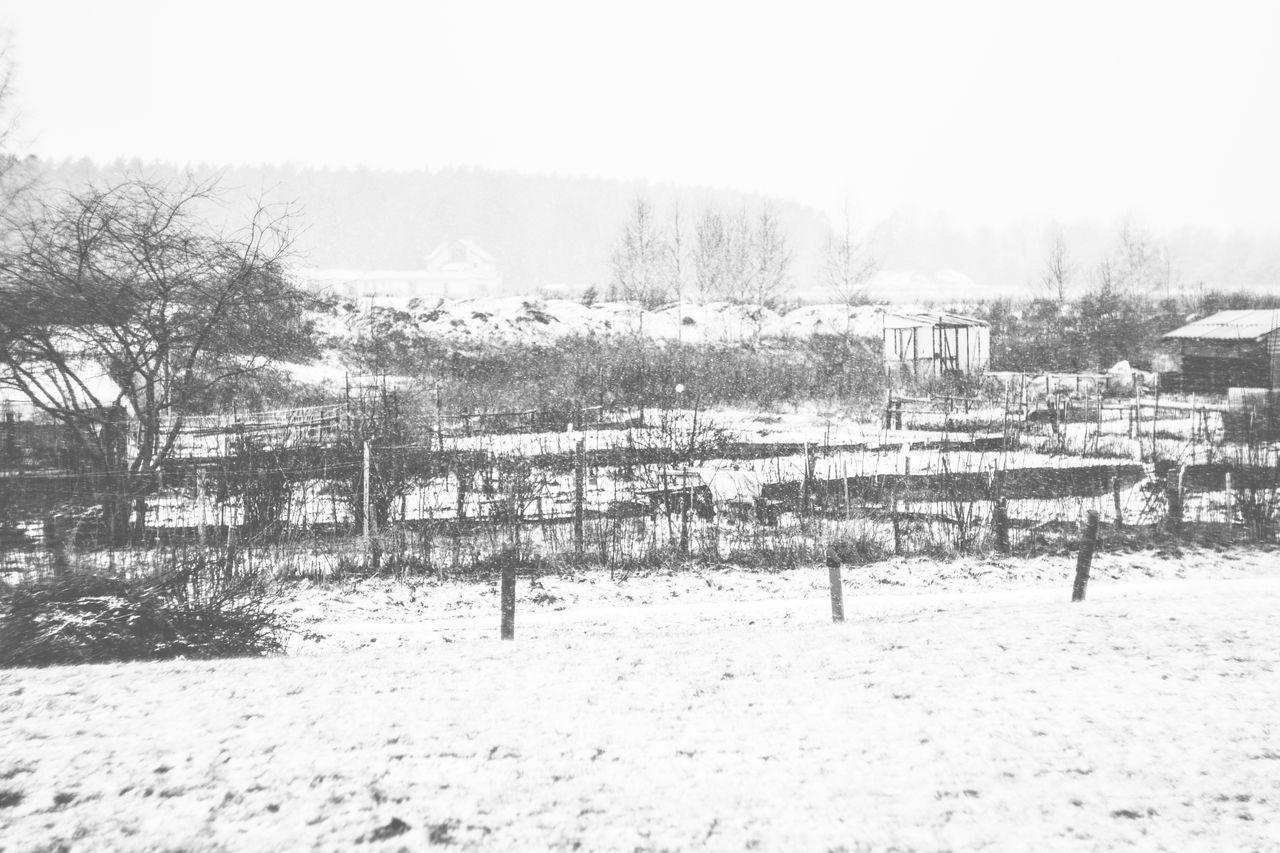 Latvija Riga Snowflakes