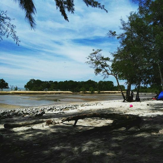 Tree Nature Outdoors Beauty In Nature Beach Mangrove Forest