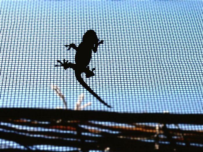 ウチの やもり ちゃん House-gecko Sihouette  家守 Came To  Myroom اردیبهشت