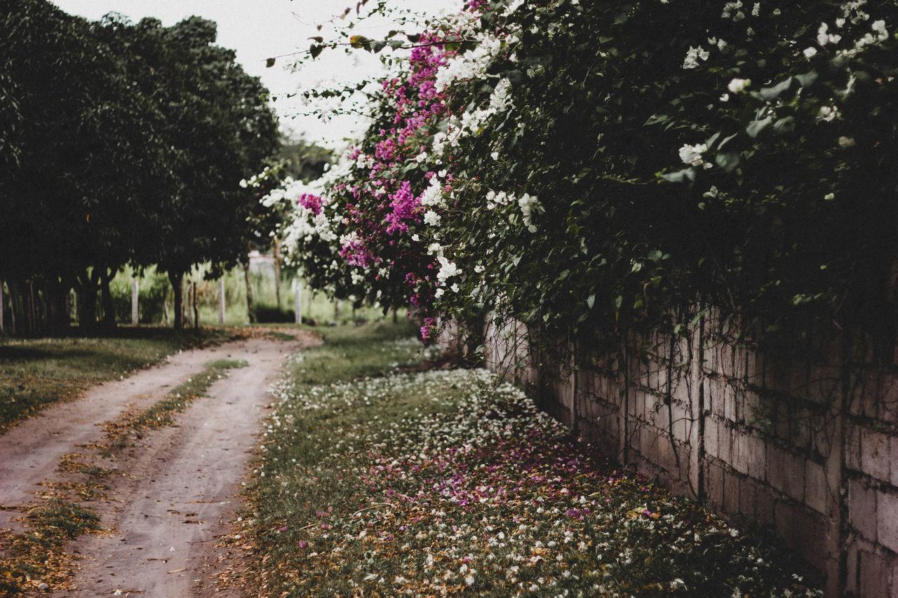 Flowering Trees By Dirt Road
