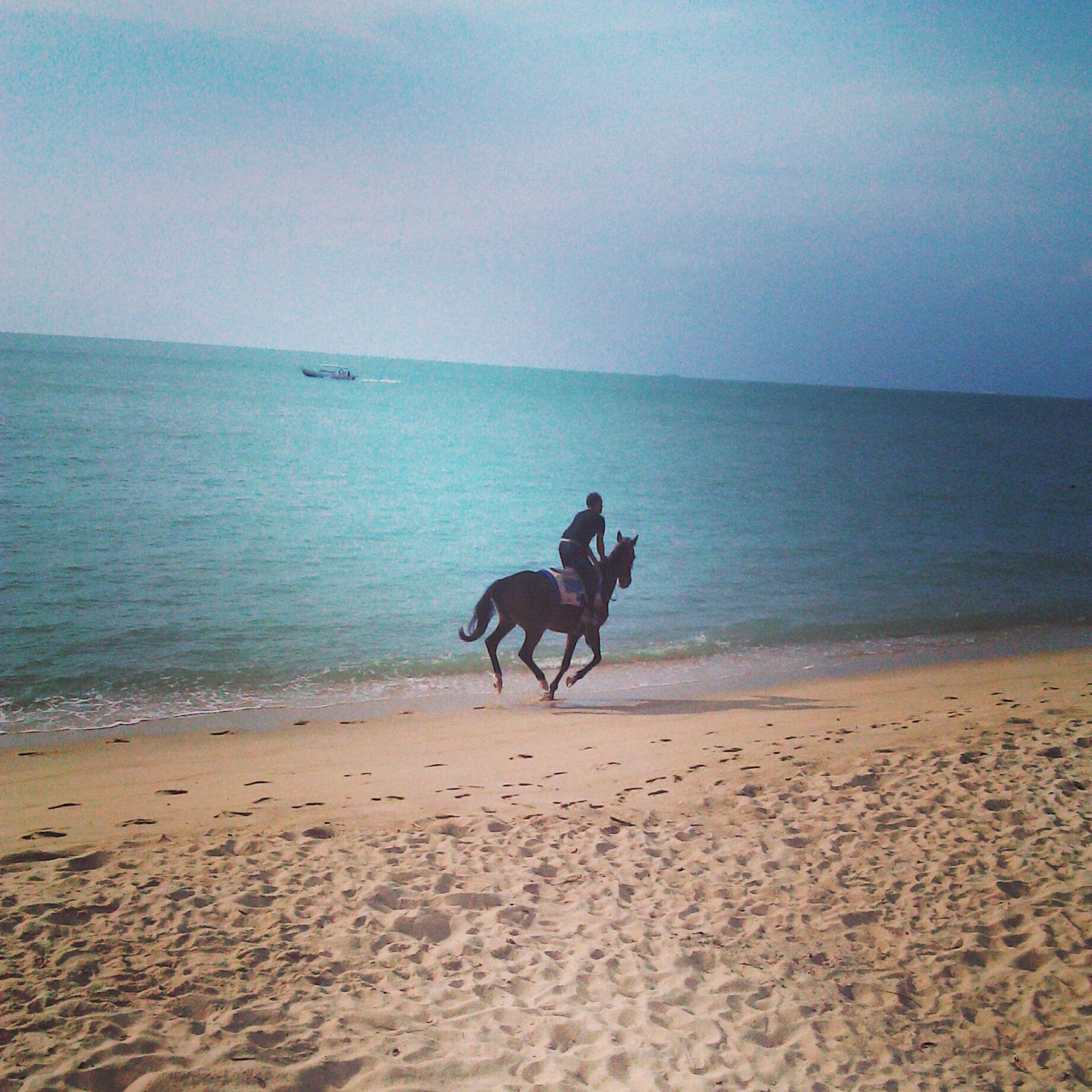 beach, sea, domestic animals, animal themes, dog, mammal, sand, pets, water, horizon over water, shore, one animal, sky, nature, full length, tranquil scene, tranquility, scenics, beauty in nature, horse