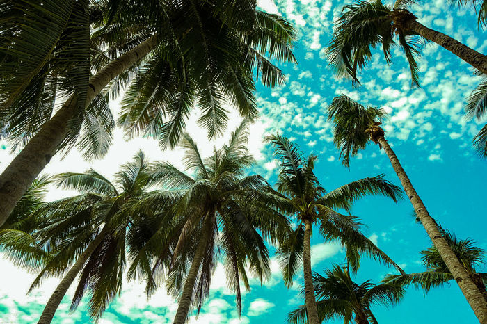 Coconut Low Angle View Outdoors Palm Tree Paradise Scenery Sky Tranquility Tropical