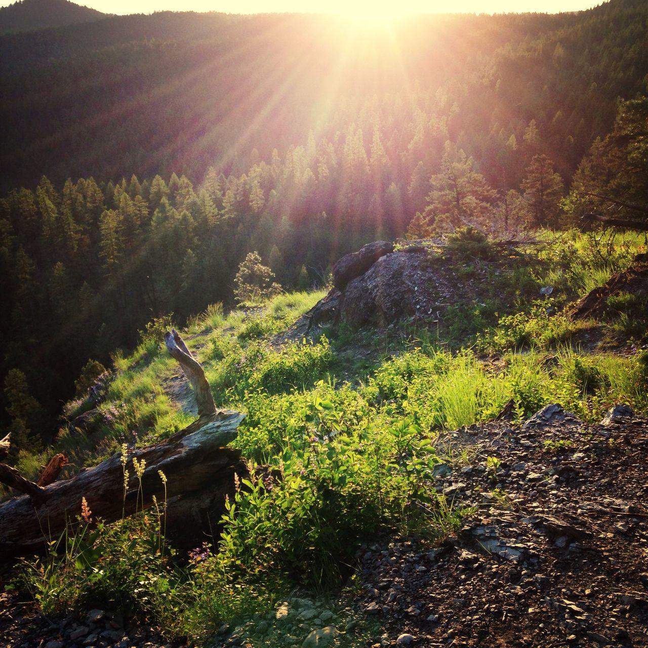 Sunshine over summer forest