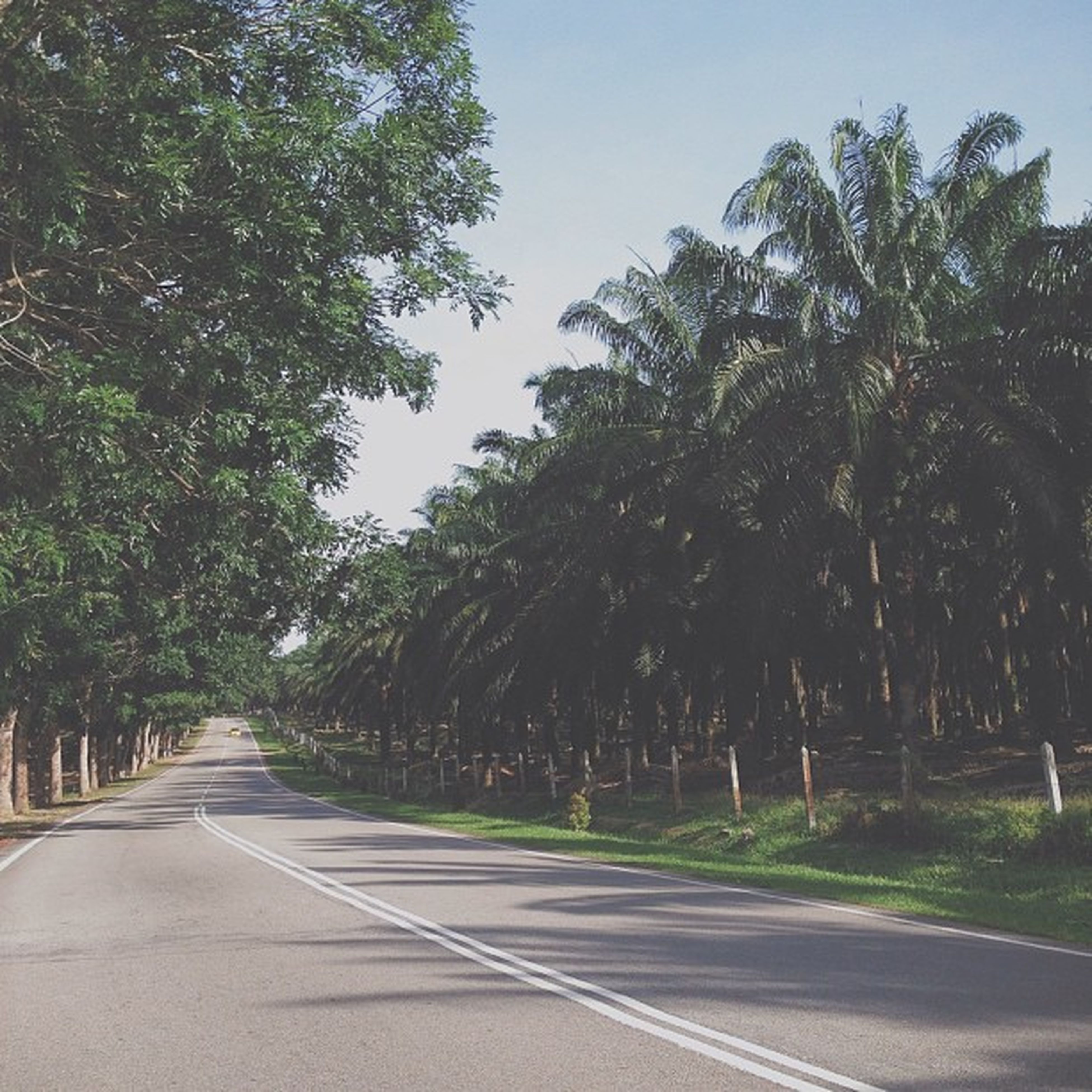 the way forward, tree, road, transportation, diminishing perspective, vanishing point, road marking, empty road, treelined, growth, street, empty, tranquility, country road, clear sky, long, sky, nature, asphalt, tranquil scene