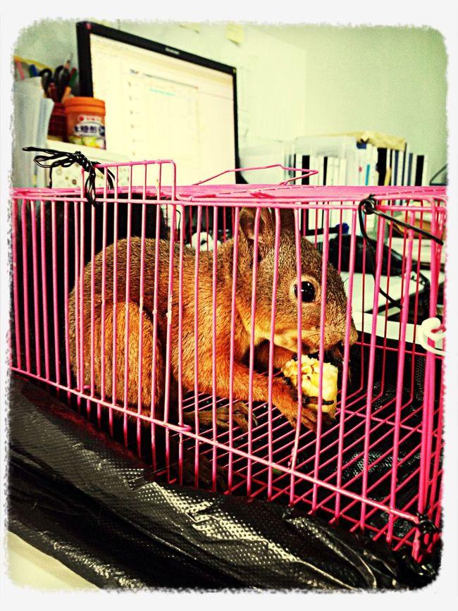 4个月大的闹闹,你不暴躁的时候还是挺可爱的? 魔王松鼠