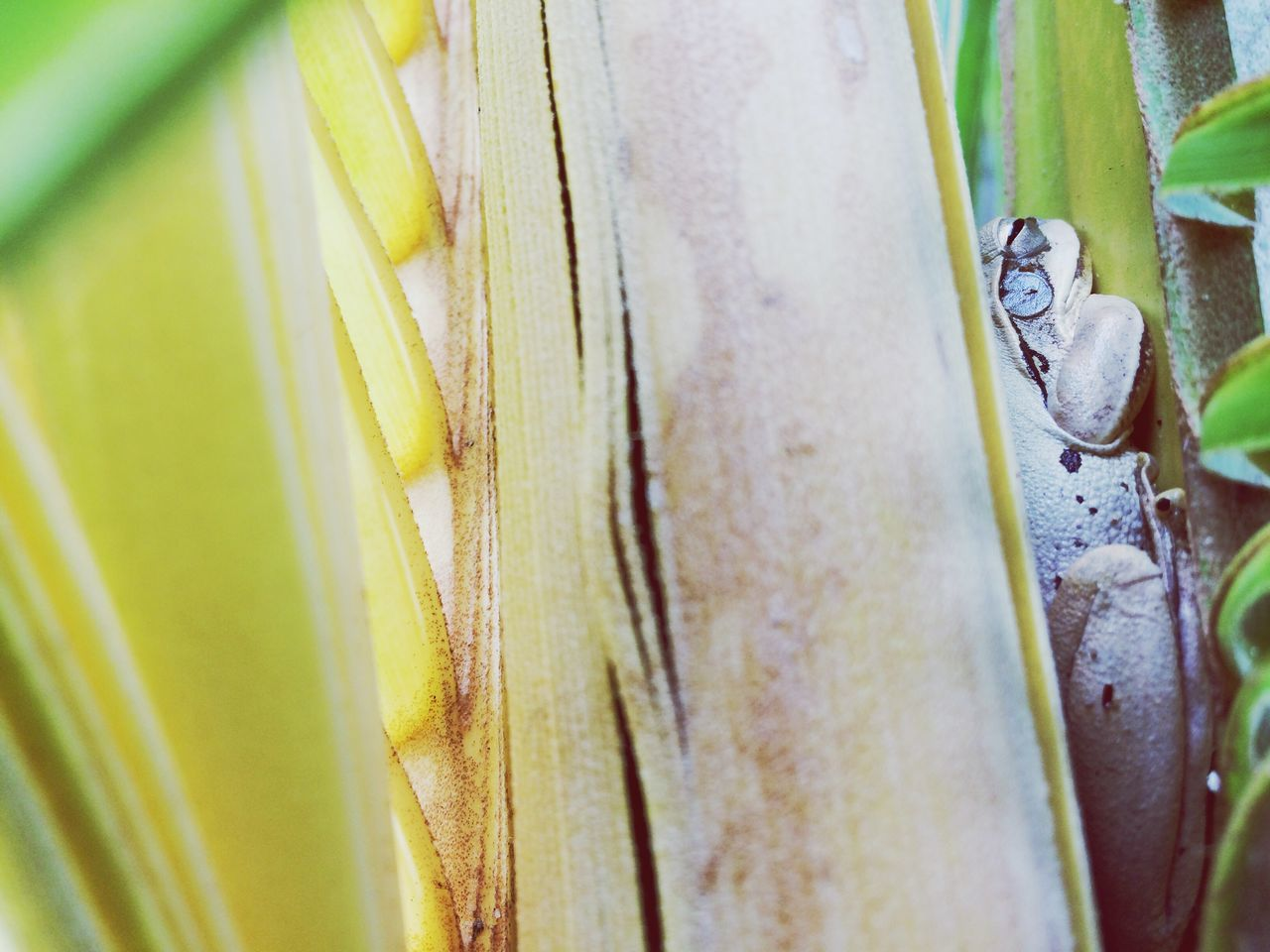 close-up, no people, selective focus, day, plant, backgrounds, animals in the wild, outdoors, animal themes, nature