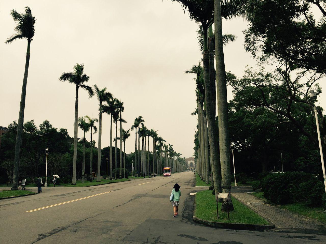 Campus Gongguan Taipei Taiwan University 國立臺灣大學 National Taiwan University  大學 臺大