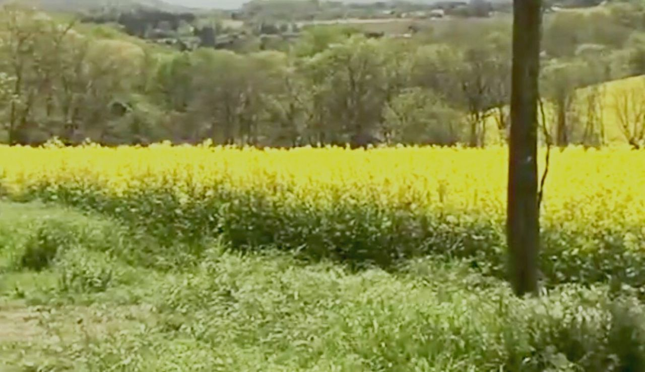 Agriculture Field Growth No People Tree Nature Green Color Landscape Rural Scene Day Plant Beauty In Nature Outdoors Freshness Grass Close-up