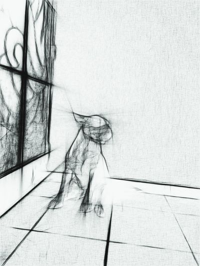 Sketch of bullterrier Taking Photos Check This Out Minimalism Animal Photography Hello World Bullterrier Sketch