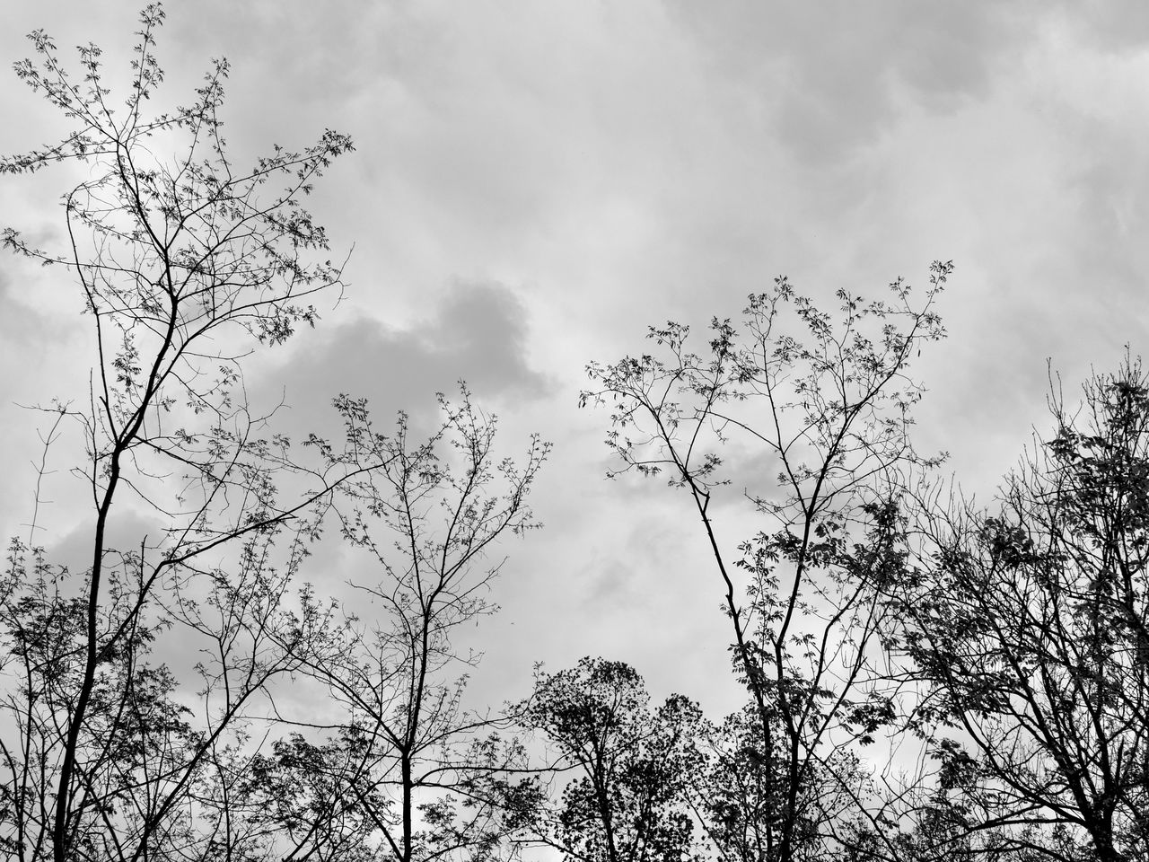 tree, low angle view, sky, nature, beauty in nature, cloud - sky, outdoors, no people, branch, growth, tranquility, day, scenics