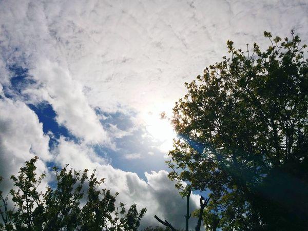Clouds ⛅Relaxing Enjoying Life Hanging Out Taking Photos Nexus5 Nexus5photography Douglas Clouds And Sky Clouds Sunshine