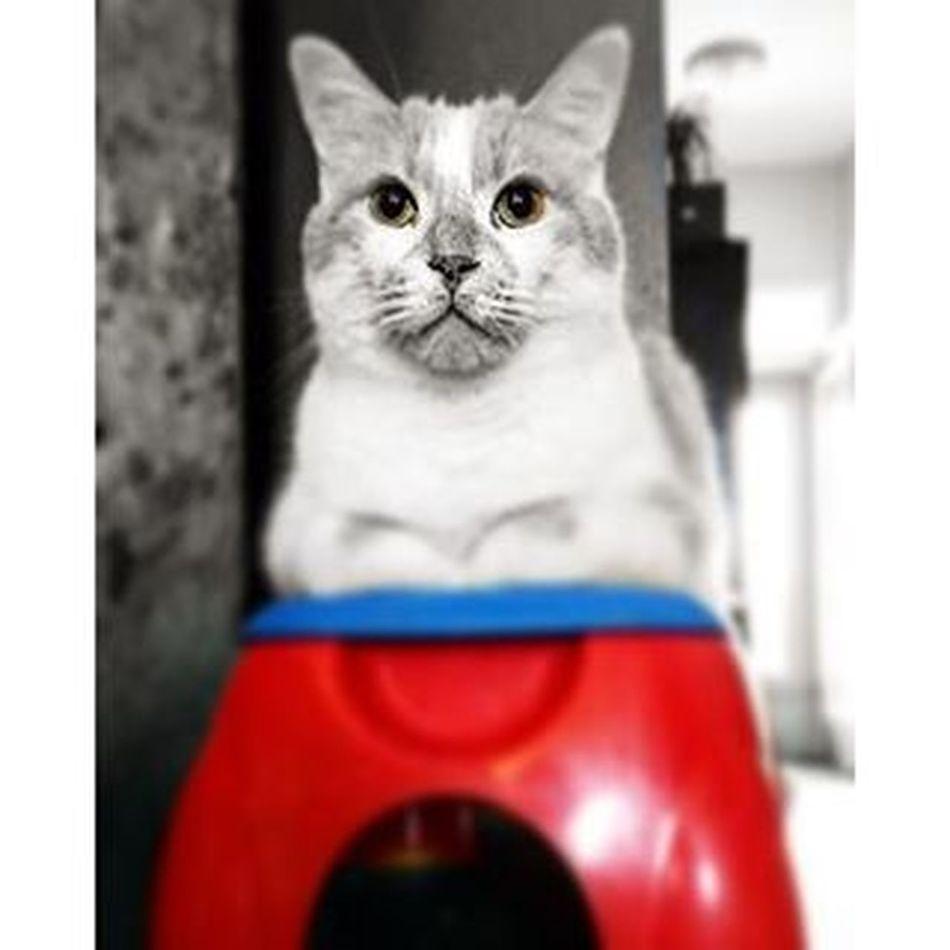 Mr Magoo found a new spot to sit watch the dog. Mrmagoothecat Imwatchingyou Cat Catsofinstagram . iwishiwasalittlebittaller