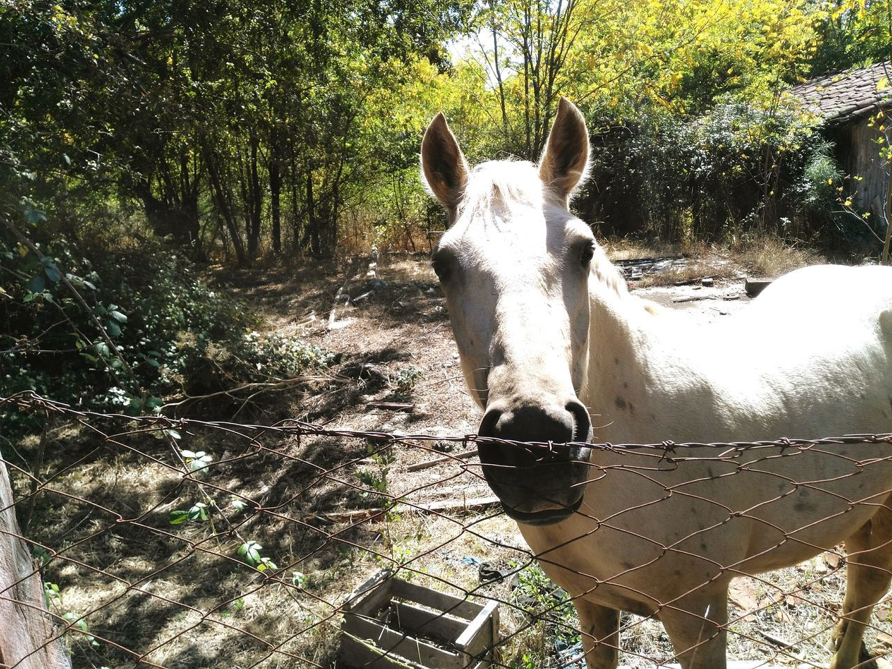horse, domestic animals, one animal, animal themes, mammal, day, tree, no people, outdoors, standing, livestock, nature, portrait, close-up