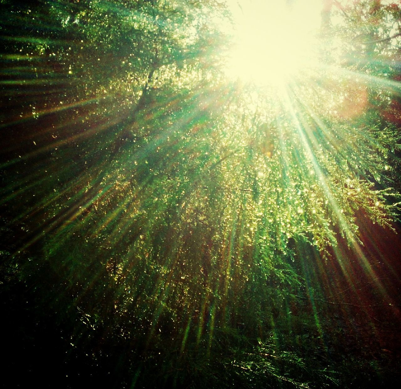 sunbeam, nature, sunlight, forest, sun, tree, growth, beauty in nature, low angle view, no people, day, outdoors, tranquility, bamboo - plant, scenics