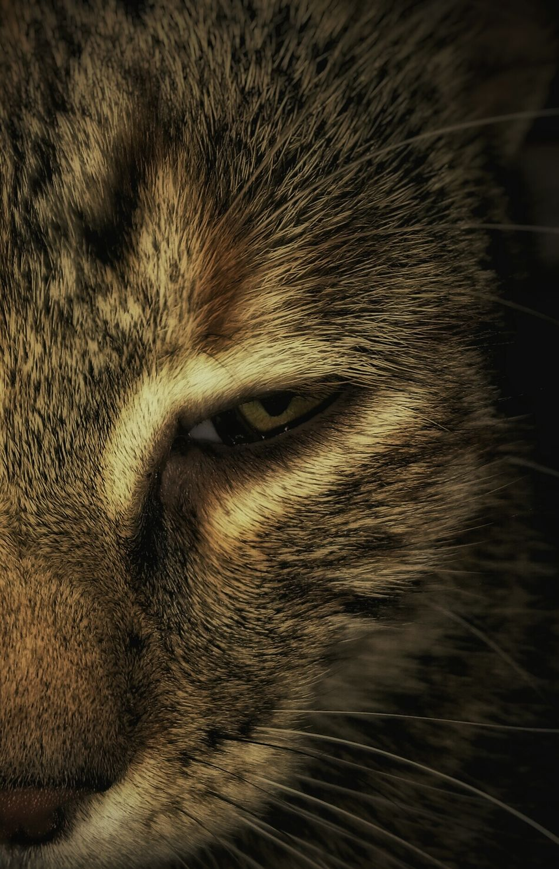 Wild Look Kitten Eyes Pets Mobilephotography