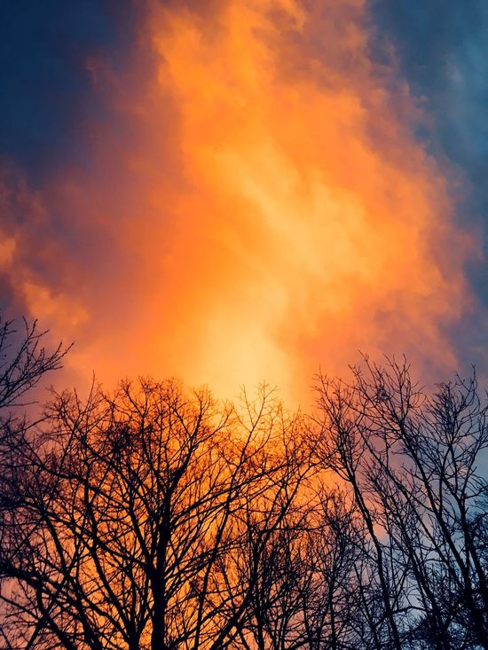 Bäume, Himmel, Wolken, Licht, Farben, Feuer, Brand, Rauchwolke, dramatischer Himmel, Äste, orange, WALDBRAND🔥 Fire Dramatic Dramatic Sky Orange Color Beauty In Nature Tree Low Angle View Sunset Nature Bare Tree Sky Tranquil Scene Outdoors Cloud - Sky