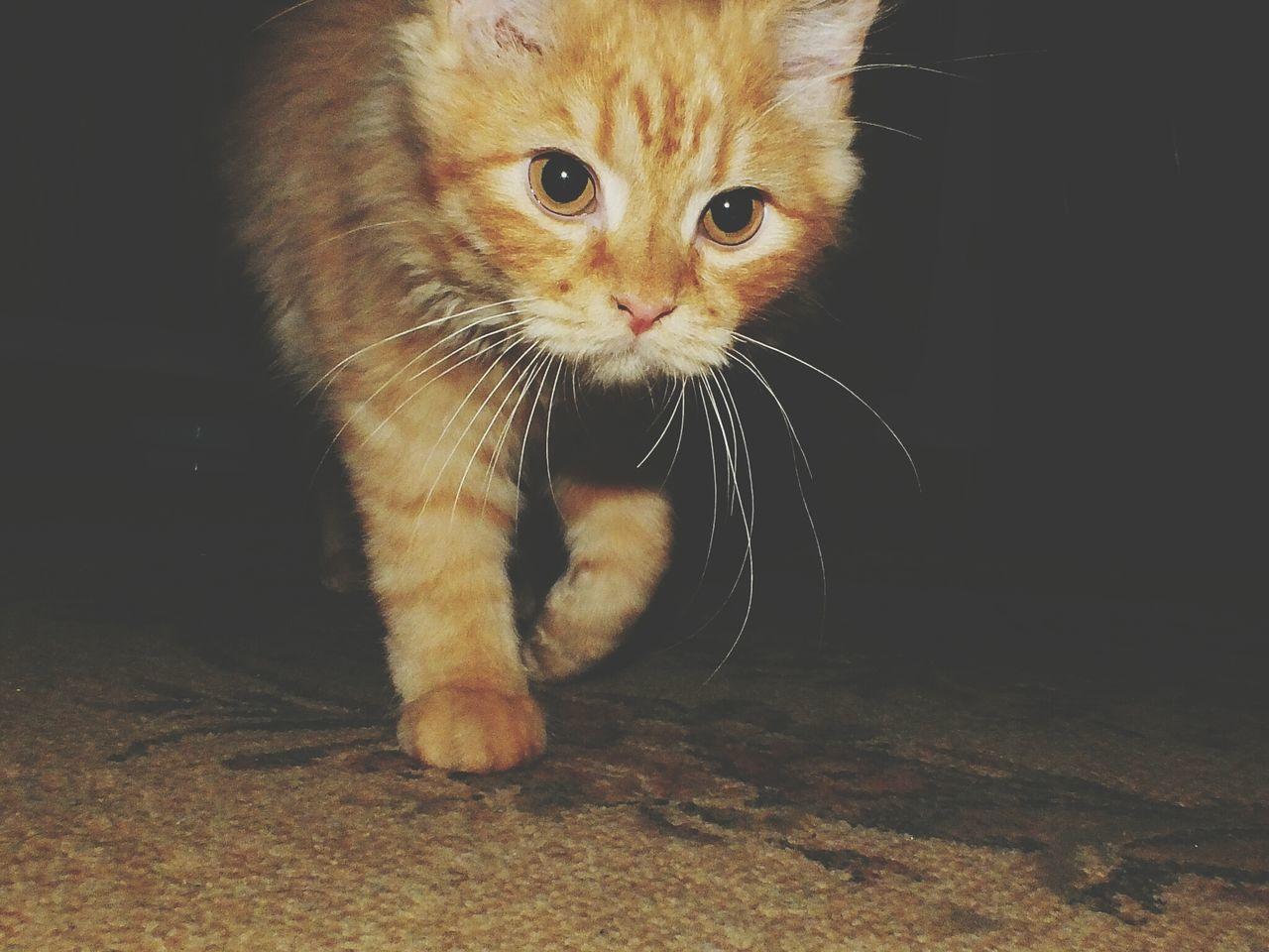 meshoooo Pets Corner Enjoying Life Cat My Cat