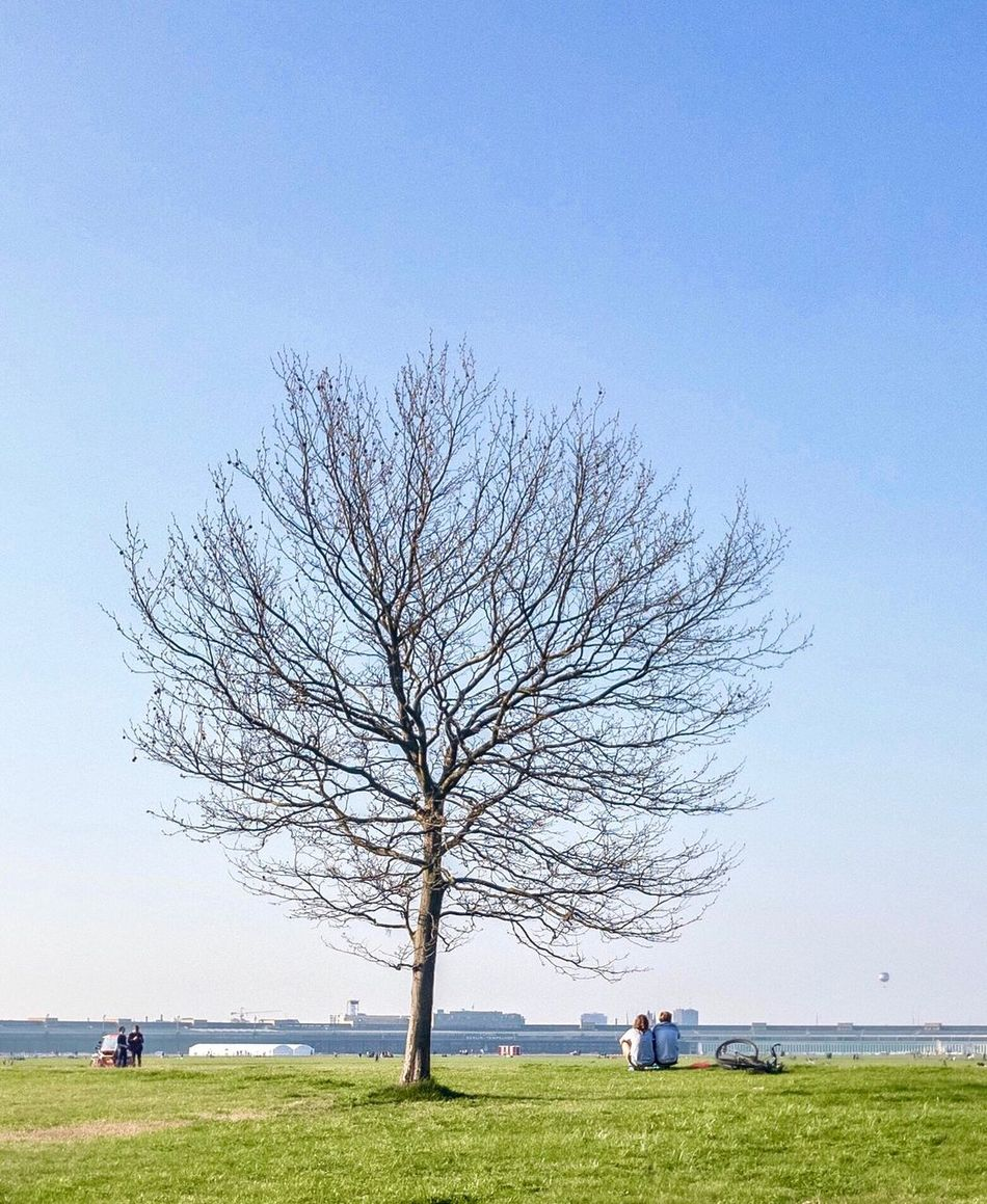 Tree Bare Tree Nature Clear Sky Grass Outdoors Beauty In Nature Day Branch Men People Exploring Berlin Springtime Tempelhofer Feld Beautiful Park