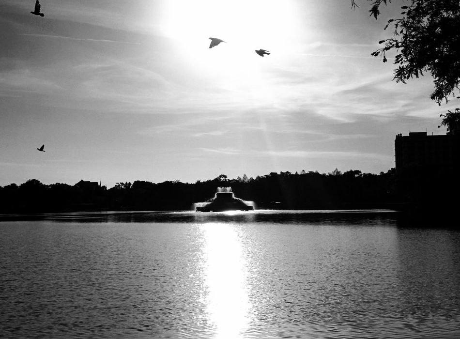 Lake Eola Park Downtown Flying Bird Sky Silhouette Reflection Tranquility Tree Lake Water Outdoors Nature Landscape Day Spread Wings Orlando Blackandwhite Leonidas Silhouette