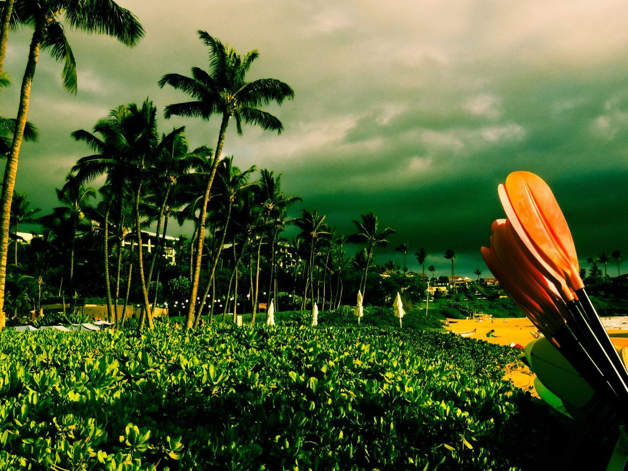 Maui Hawaii Palm Tree Beauty In Nature Paddles Paddleboarding Beach Green Color Resort Beach Resort Travel