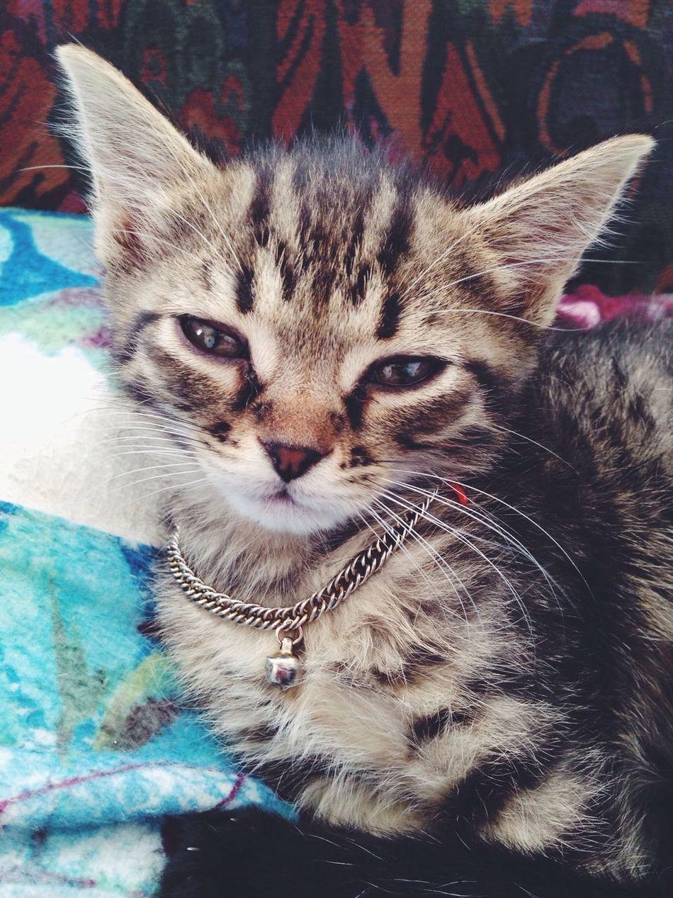 Kitten I Love My Cat Hello World Cute