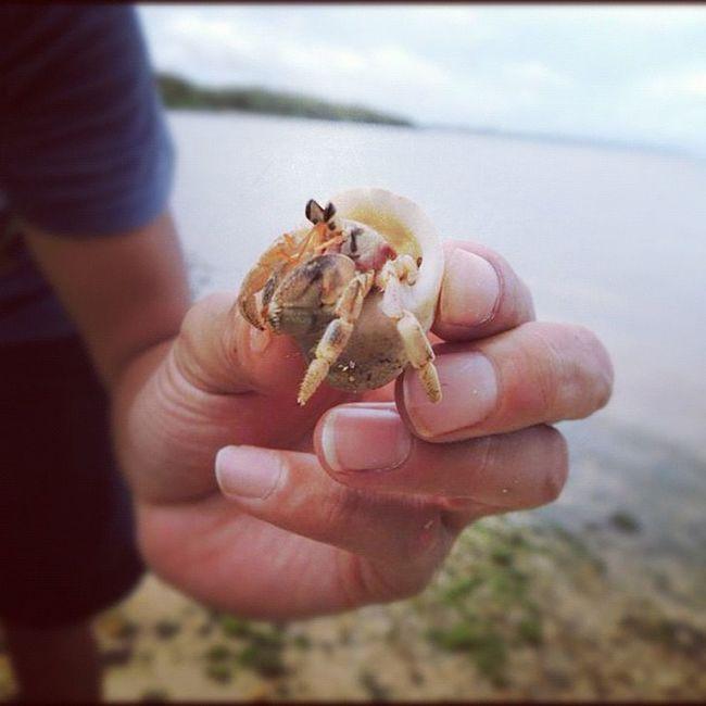 グアムのおまけ ヤドカリ Hermit crab Sea Guam 海 Hafaadai グアム