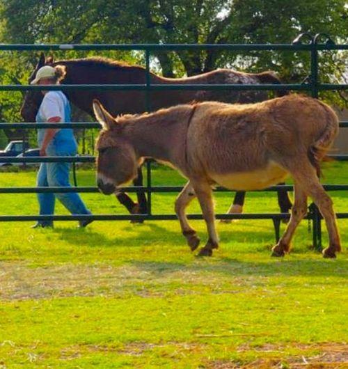 Make Magic Happen I Love My Horse ❤️ Çøłôūrfûłł Höršęś Donkey Family Pet I Love Donkeys EyeEm Animal Lover Appaloosa I Love Appaloosa's Beautiful ♥