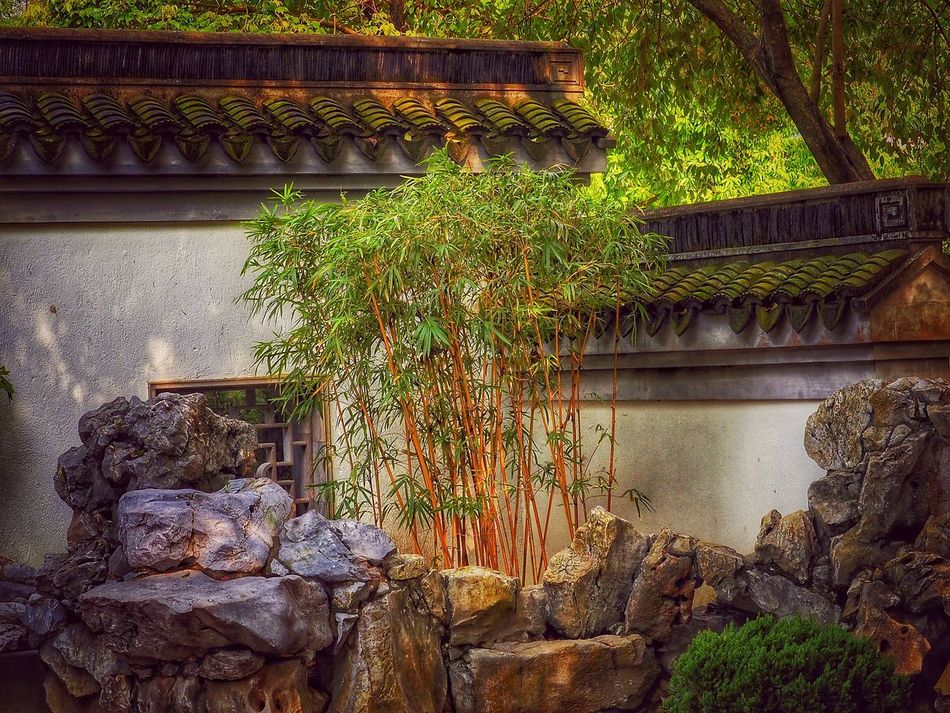 Bamboo Tree... Roof Tiles Stone Art Stone Garden Peace And Quiet Tranquility Scene EyeEm Nature Lover Mood Captures Walking Around A Moment Of Zen... Creative Light And Shadow Bokeh Photography Inspirations Everywhere. Nature_collection Dreamscapes & Memories Great Atmosphere