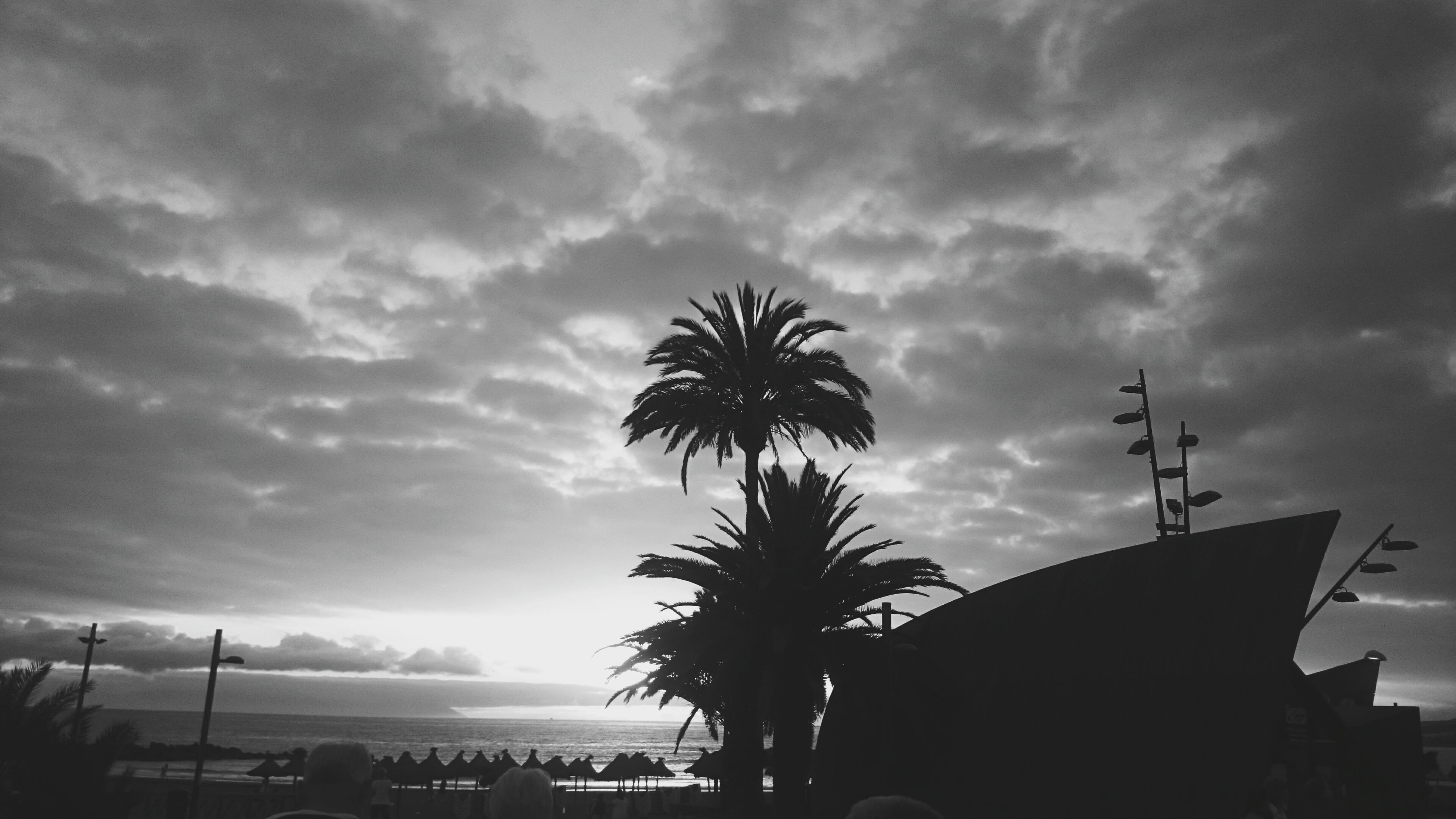 palm tree, silhouette, sky, tree, low angle view, cloud - sky, sunset, growth, tranquil scene, overcast, nature, outdoors, tranquility, scenics, cloud, tall - high, atmospheric mood, beauty in nature, cloudy, solitude, cloudscape, tourism, tropical tree, no people, coconut palm tree, dramatic sky, majestic, atmosphere, moody sky, outline