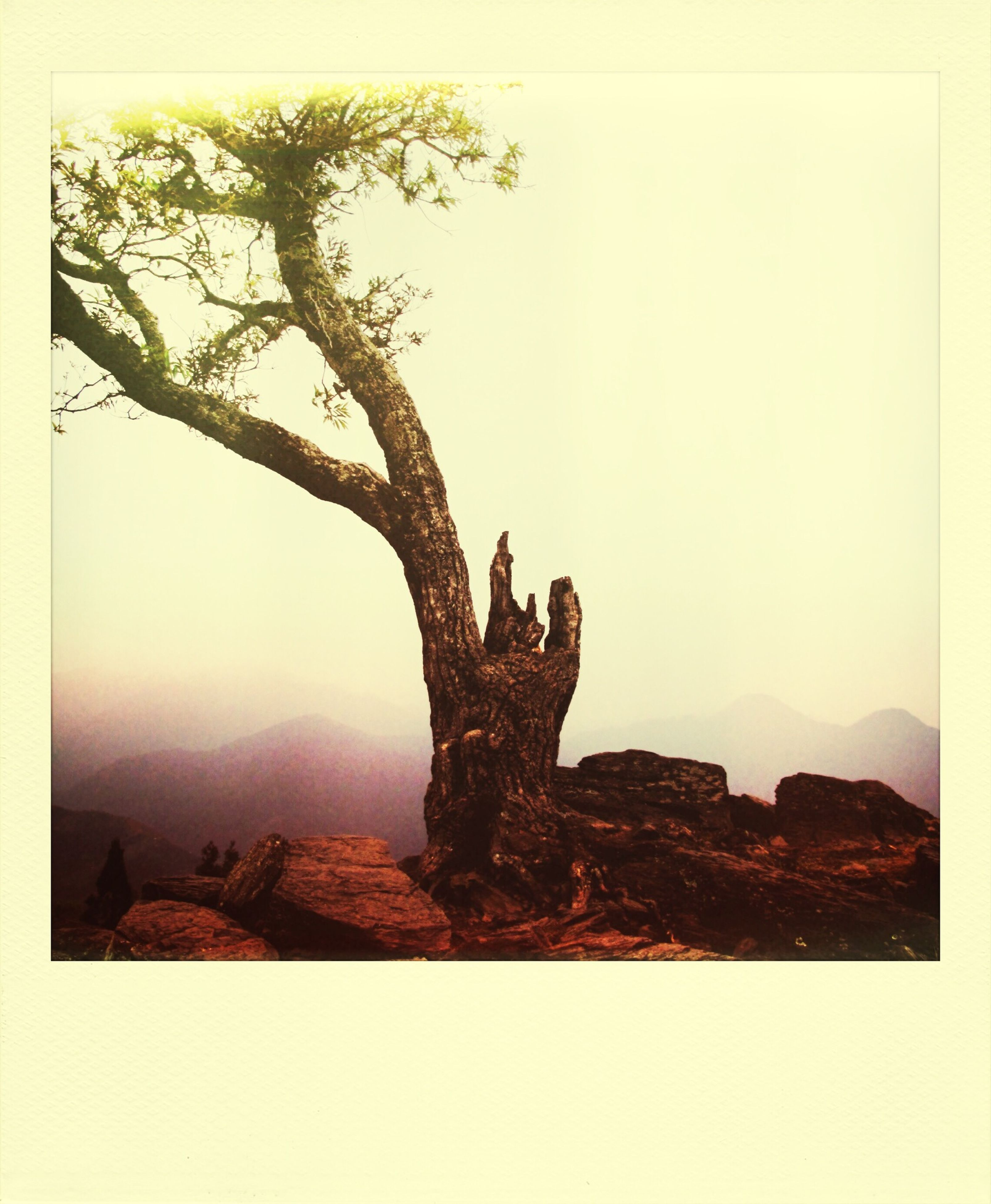 clear sky, transfer print, copy space, auto post production filter, statue, tranquility, sculpture, art and craft, low angle view, tranquil scene, nature, art, human representation, tree, rock - object, mountain, sky, rock formation, creativity, scenics