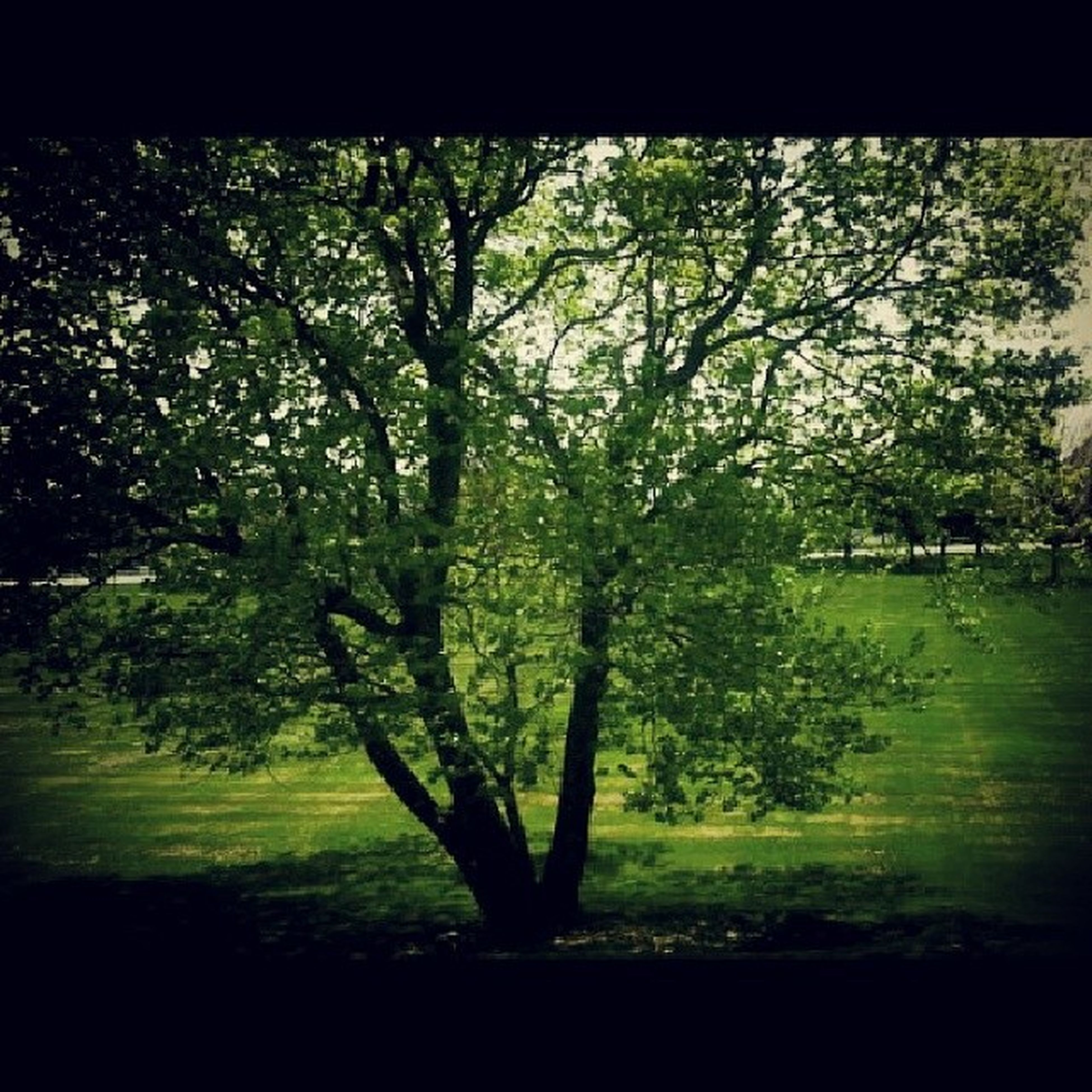 tree, branch, growth, tranquility, tranquil scene, green color, nature, beauty in nature, tree trunk, transfer print, scenics, field, auto post production filter, park - man made space, landscape, grass, day, park, sunlight, outdoors