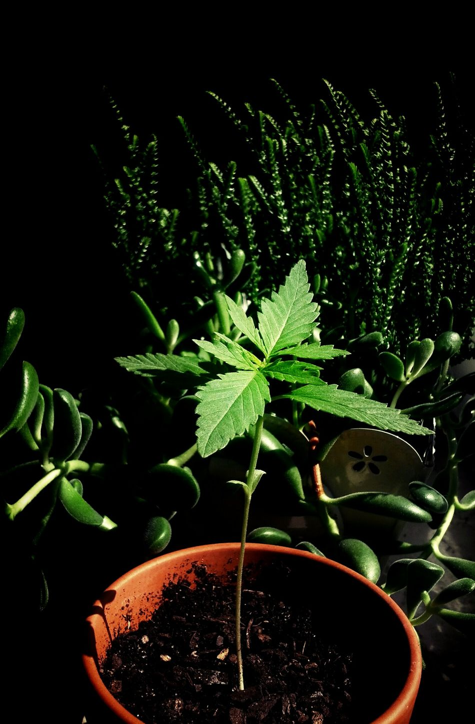 Grow Slow Watching Plants Grow Growing Plants