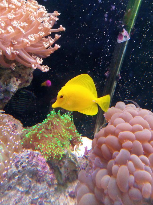 金色的鱼儿^_^ Beautiful Day Enjoying Life Special Fish Beautiful Animals