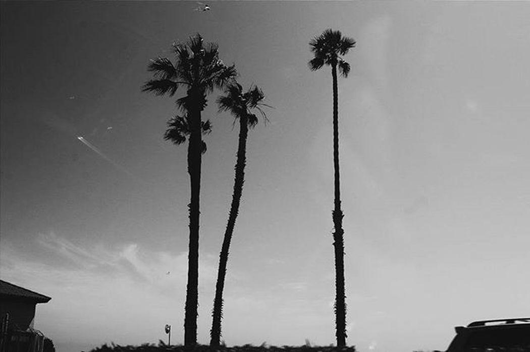 So serene. So calm. So refreshing. 😚 😚 Malibu Zuma Beach Palmtrees Ocean Waves Clouds Skies Instaskies VSCO Instagood Shadows Vscogram Vscogood Blackandwhite 70d Pancakelens