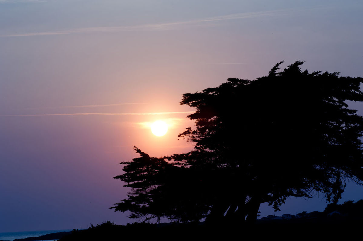 Sunset and the silhouette of a tree. Préfailles, France. Beauty In Nature France France 🇫🇷 France🇫🇷 Growth Horizon Over Water Nature Night No People Ocean Ocean View Outdoors Prefailles Scenics Sea Silhouette Sky Sun Sunset Tranquil Scene Tranquility Tree Water